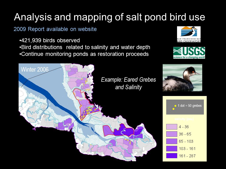 Winter 2006 Example: Eared Grebes and Salinity salinity (psu) 1 dot = 50 grebes Analysis and mapping of salt pond bird use Report due end of 2009 2009 Report available on website 421,939 birds observed Bird distributions related to salinity and water depth Continue monitoring ponds as restoration proceeds