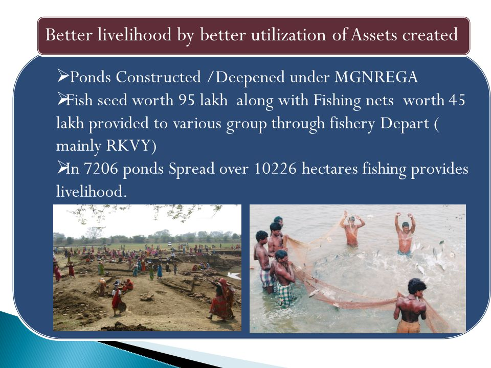  Ponds Constructed /Deepened under MGNREGA  Fish seed worth 95 lakh along with Fishing nets worth 45 lakh provided to various group through fishery