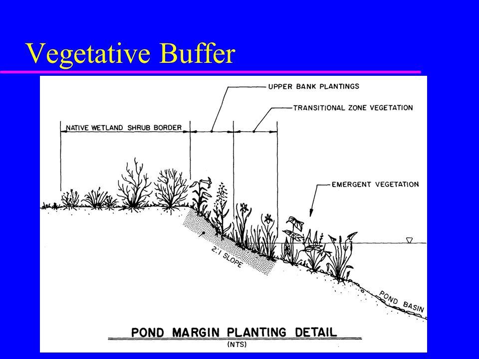 Vegetative Buffer