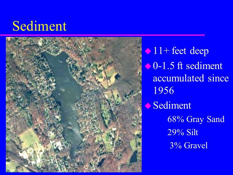 Sediment u 11+ feet deep u 0-1.5 ft sediment accumulated since 1956 u Sediment 68% Gray Sand 29% Silt 3% Gravel