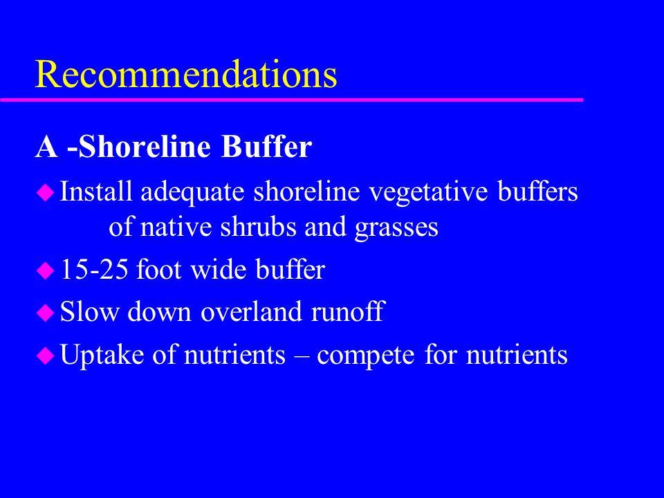 Recommendations A -Shoreline Buffer u Install adequate shoreline vegetative buffers of native shrubs and grasses u 15-25 foot wide buffer u Slow down
