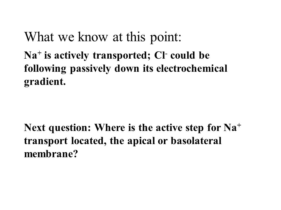 What we know at this point: Na + is actively transported; Cl - could be following passively down its electrochemical gradient.