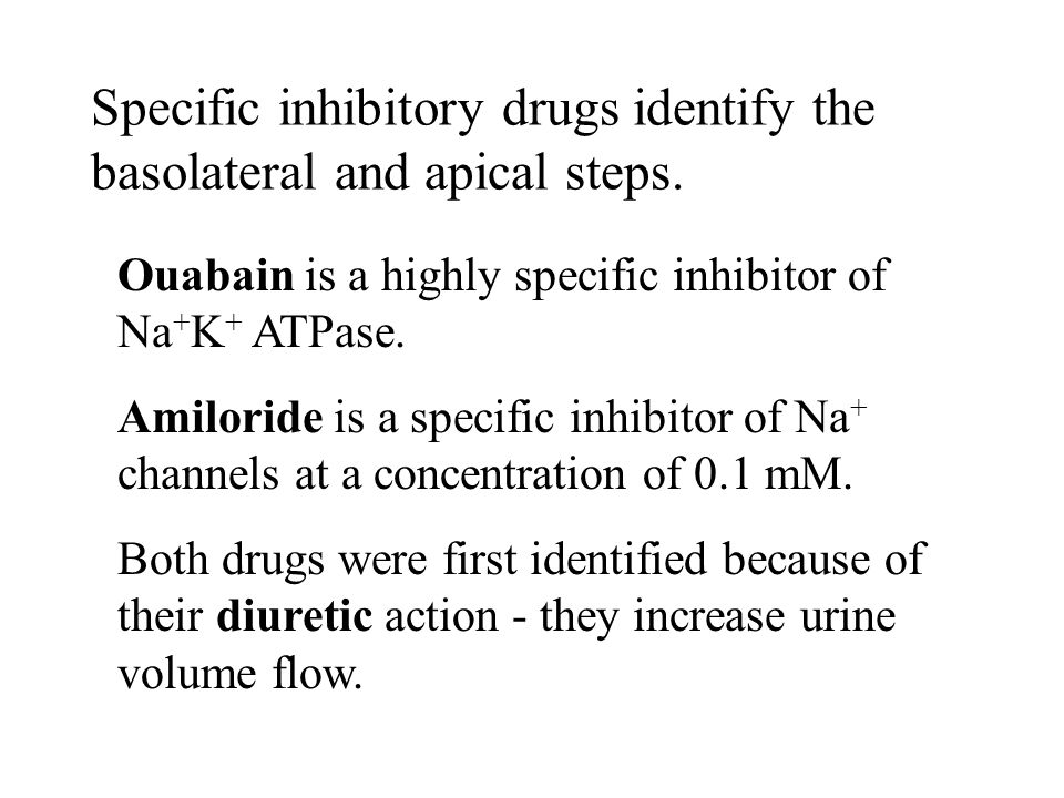 Specific inhibitory drugs identify the basolateral and apical steps.