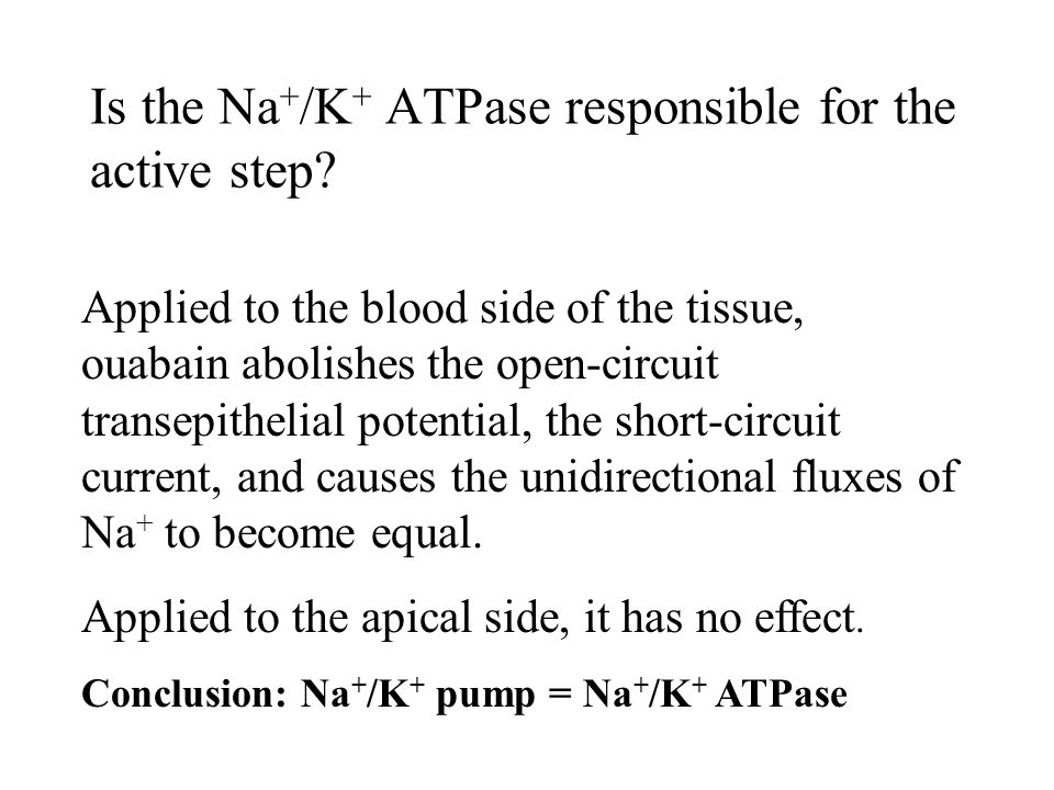 Is the Na + /K + ATPase responsible for the active step.