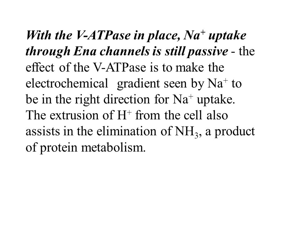 With the V-ATPase in place, Na + uptake through Ena channels is still passive - the effect of the V-ATPase is to make the electrochemical gradient seen by Na + to be in the right direction for Na + uptake.