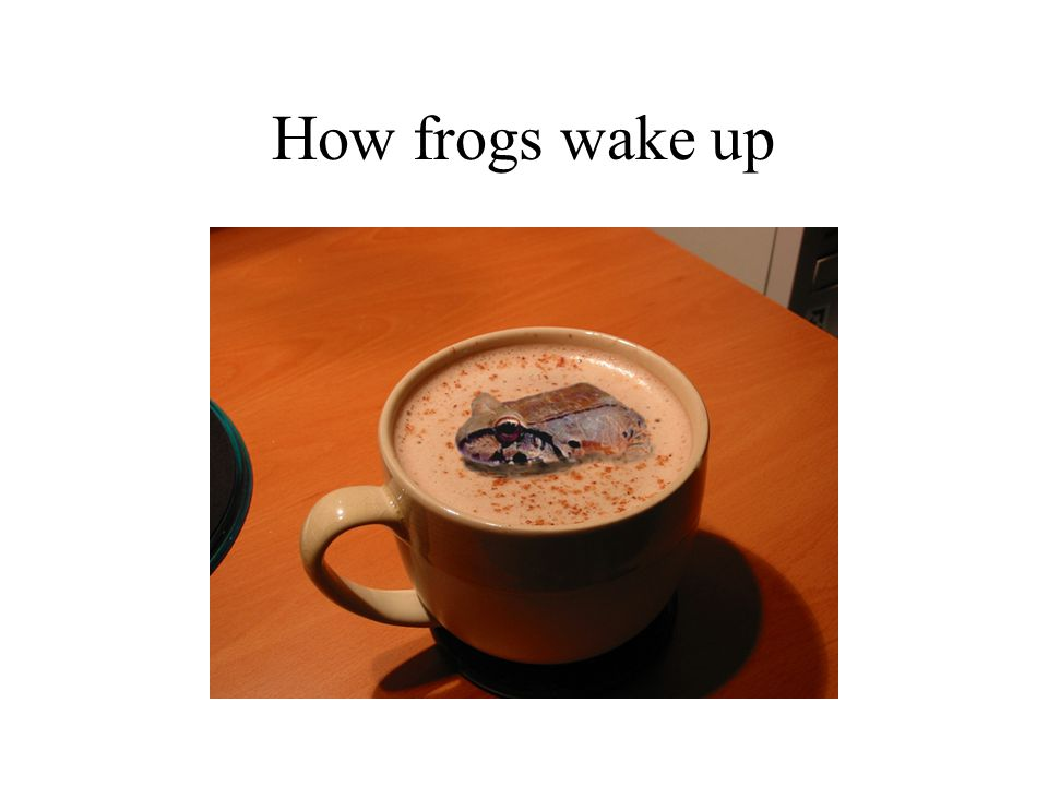 How frogs wake up