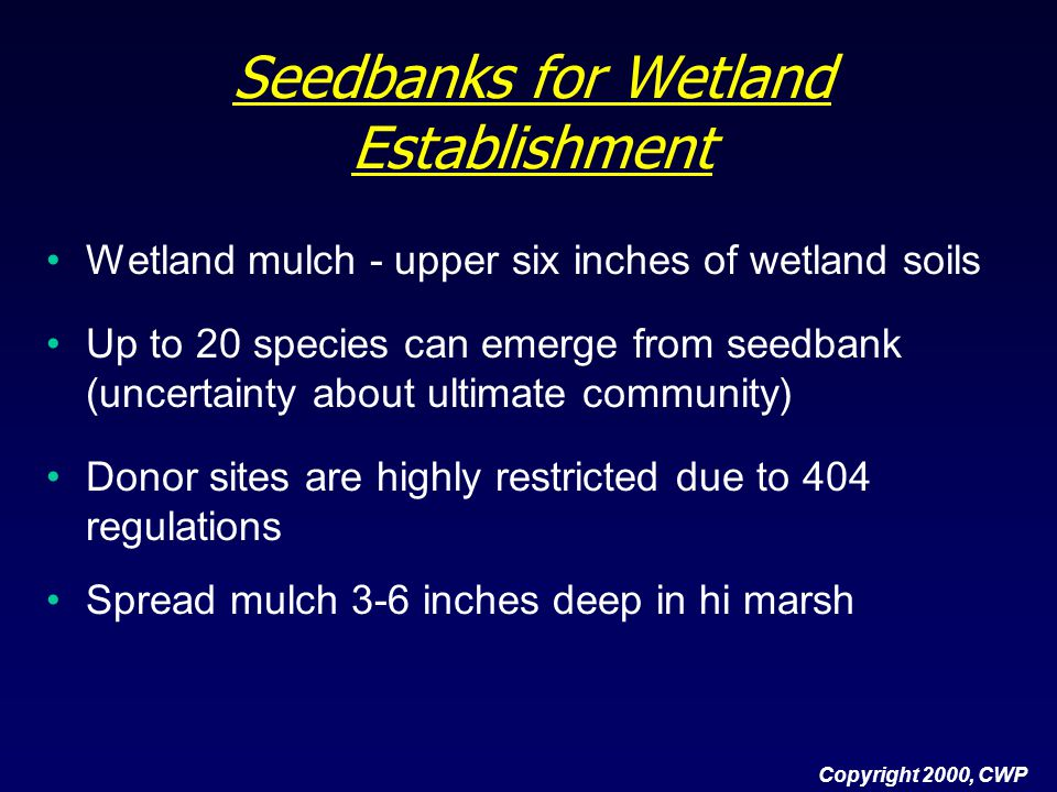 Copyright 2000, CWP Seedbanks for Wetland Establishment Wetland mulch - upper six inches of wetland soils Up to 20 species can emerge from seedbank (u