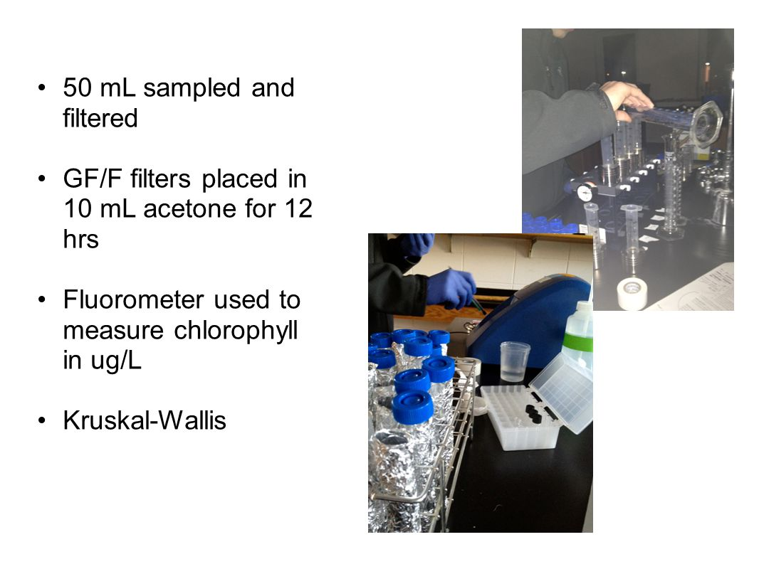 Methods Continued… 50 mL sampled and filtered GF/F filters placed in 10 mL acetone for 12 hrs Fluorometer used to measure chlorophyll in ug/L Kruskal-Wallis