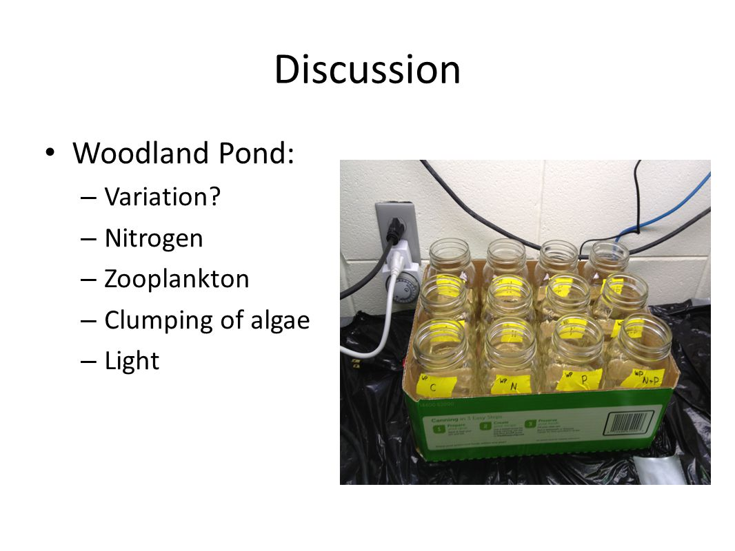 Discussion Woodland Pond: – Variation? – Nitrogen – Zooplankton – Clumping of algae – Light