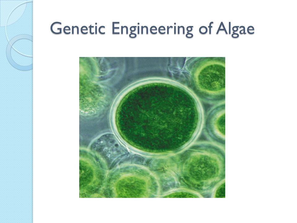 Genetic Engineering of Algae