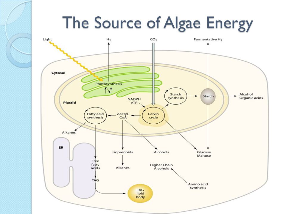 The Source of Algae Energy