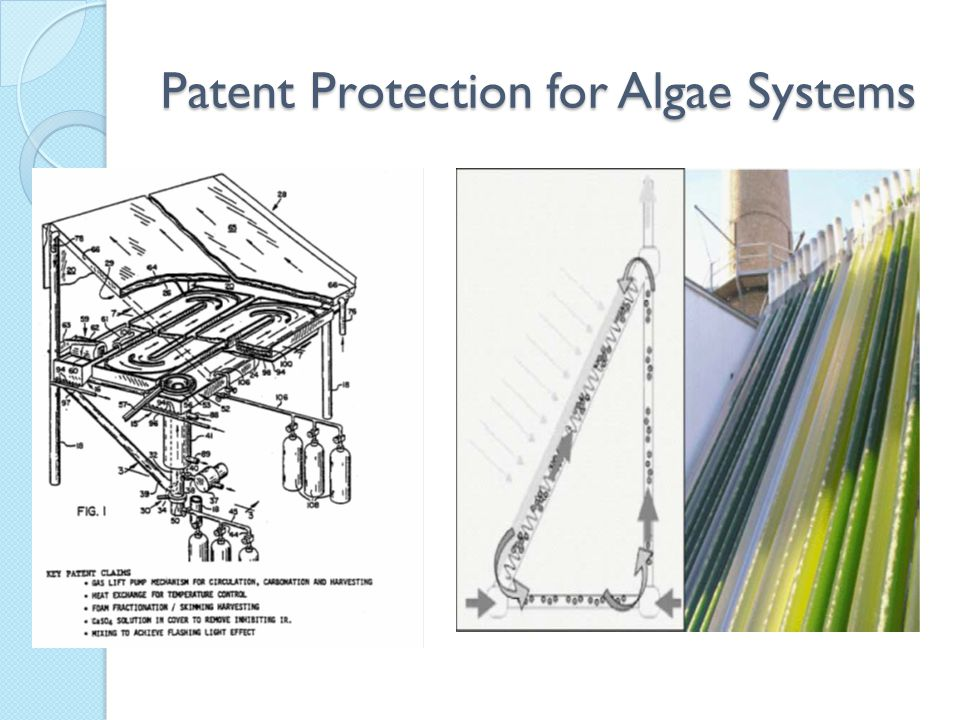 Patent Protection for Algae Systems