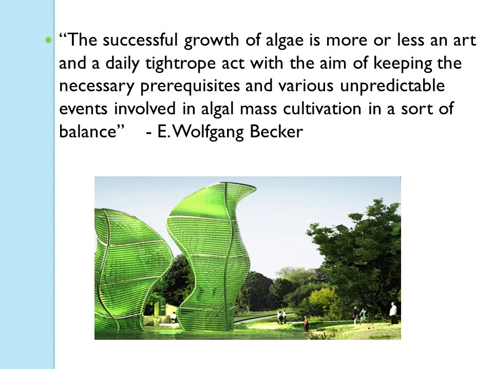 """The successful growth of algae is more or less an art and a daily tightrope act with the aim of keeping the necessary prerequisites and various unpre"