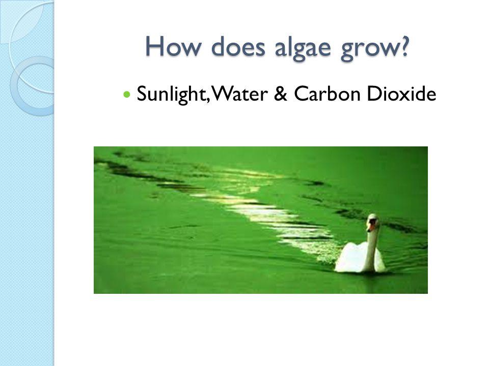 International Algae China, Japan, Argentina, New Zealand, India, & more have joined the algae game