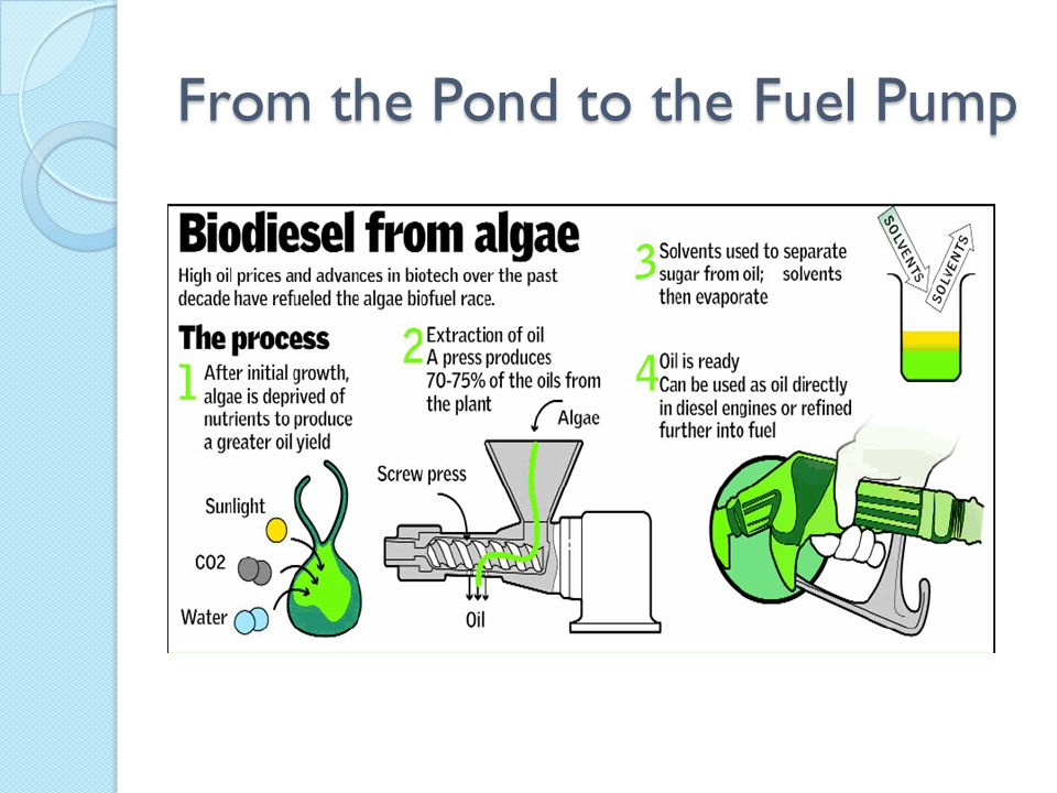 Future Predictions Biofuel Vehicles Green Buildings More Research & Development Further Private & Government Investment Clearer Regulatory & Statutory Guidelines for Algae Businesses