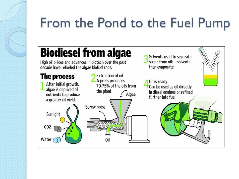 Genetic Engineering of Algae