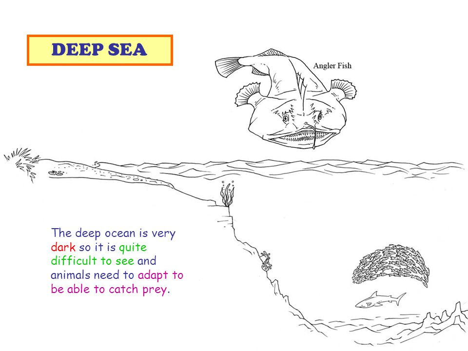 The deep ocean is very dark so it is quite difficult to see and animals need to adapt to be able to catch prey.