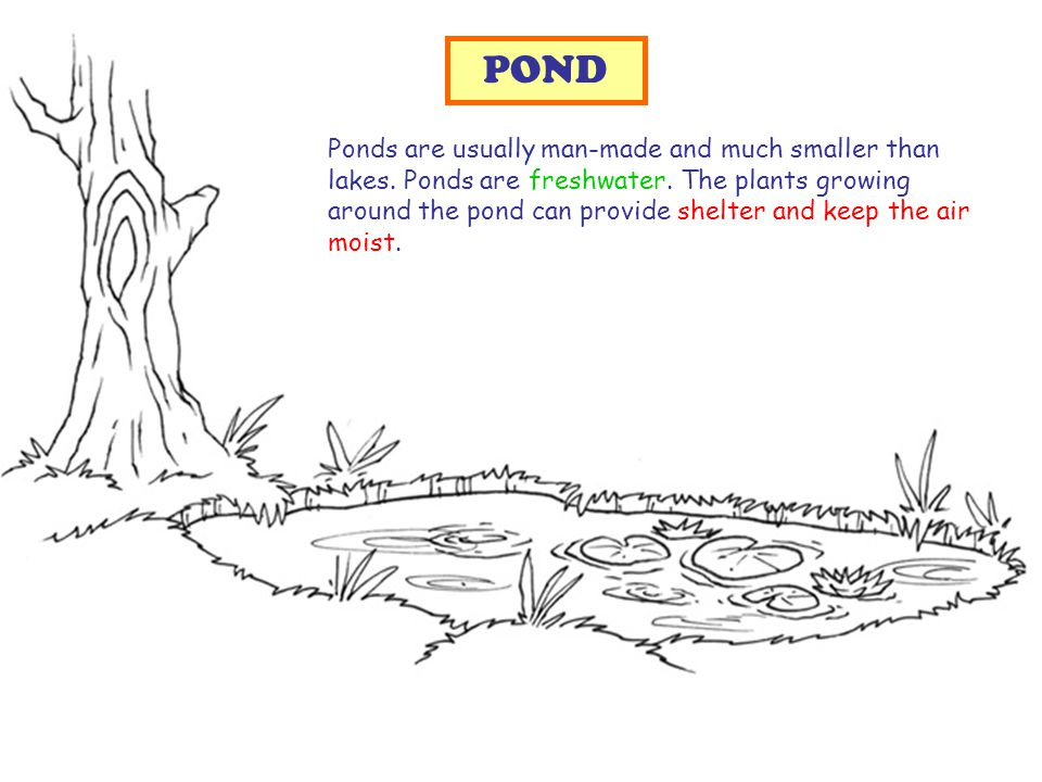Ponds are usually man-made and much smaller than lakes.
