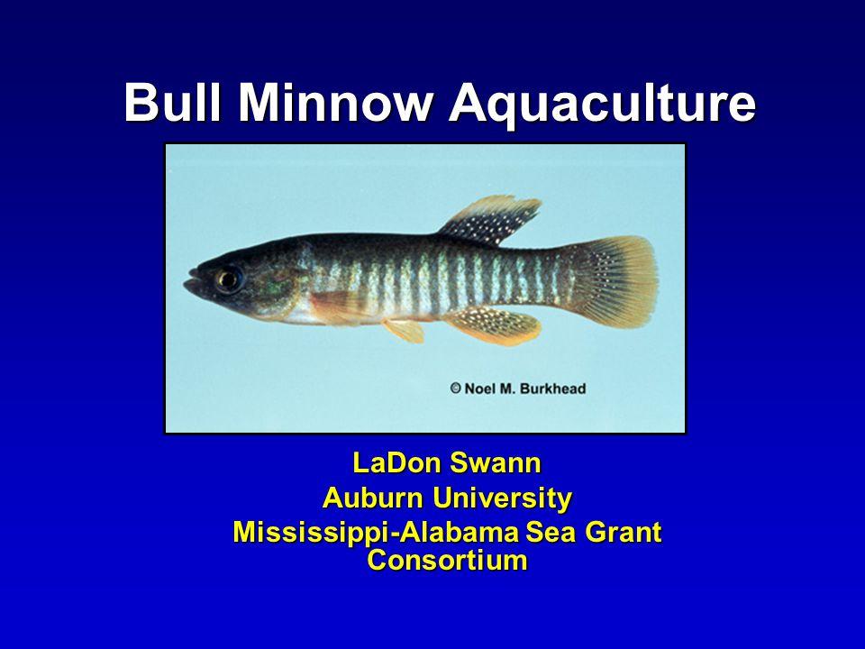 Bull Minnow Aquaculture LaDon Swann Auburn University Mississippi-Alabama Sea Grant Consortium