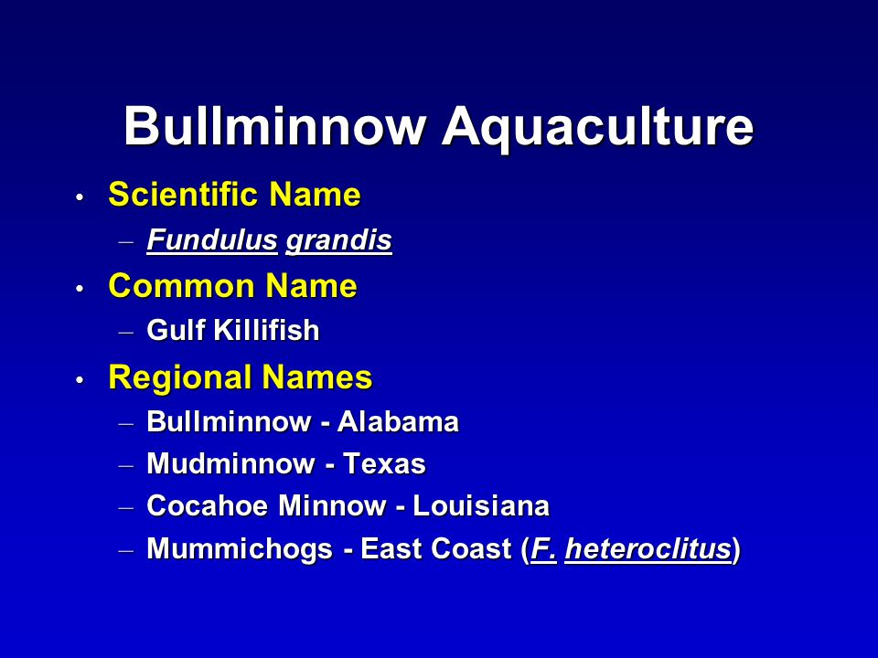 Bullminnow Aquaculture Scientific Name Scientific Name – Fundulus grandis Common Name Common Name – Gulf Killifish Regional Names Regional Names – Bullminnow - Alabama – Mudminnow - Texas – Cocahoe Minnow - Louisiana – Mummichogs - East Coast (F.