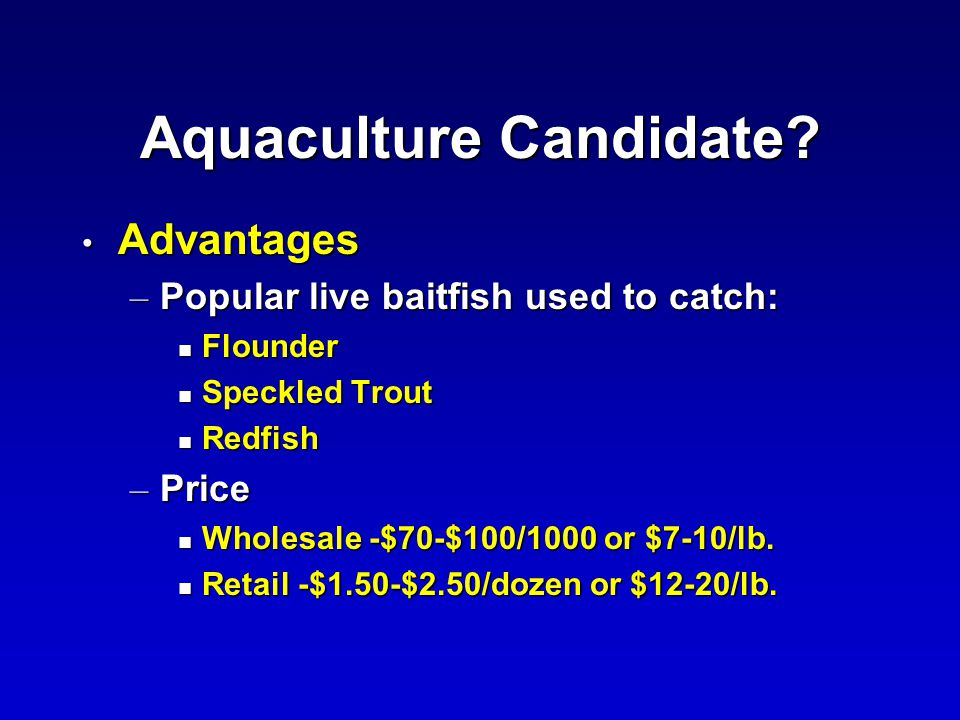 Aquaculture Candidate? Advantages Advantages – Popular live baitfish used to catch: n Flounder n Speckled Trout n Redfish – Price n Wholesale -$70-$10