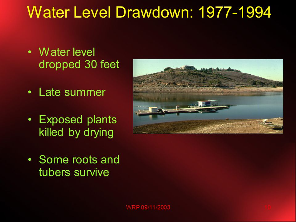 WRP 09/11/200310 W ater Level Drawdown: 1977-1994 Water level dropped 30 feet Late summer Exposed plants killed by drying Some roots and tubers survive