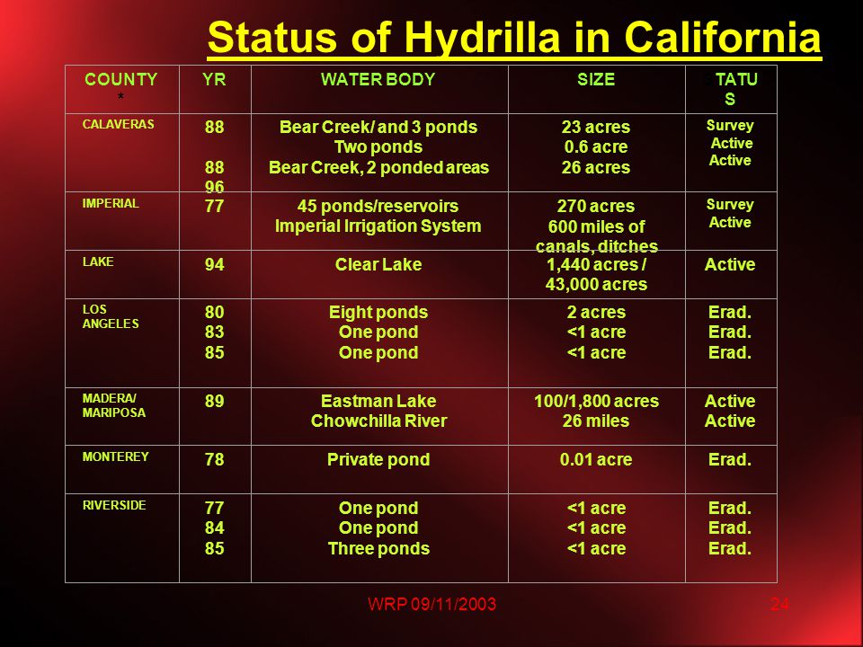 WRP 09/11/200324 Status of Hydrilla in California COUNTY * YRWATER BODYSIZESTATU S CALAVERAS 88 88 96 Bear Creek/ and 3 ponds Two ponds Bear Creek, 2 ponded areas 23 acres 0.6 acre 26 acres Survey Active IMPERIAL 77 45 ponds/reservoirs Imperial Irrigation System 270 acres 600 miles of canals, ditches Survey Active LAKE 94Clear Lake1,440 acres / 43,000 acres Active LOS ANGELES 80 83 85 Eight ponds One pond 2 acres <1 acre Erad.