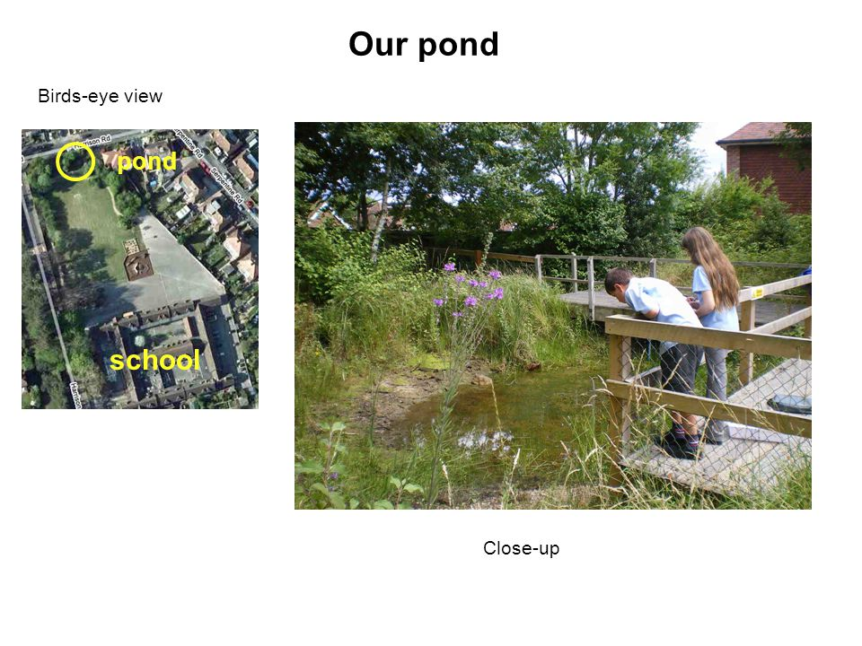 Our pond Birds-eye view school pond Close-up
