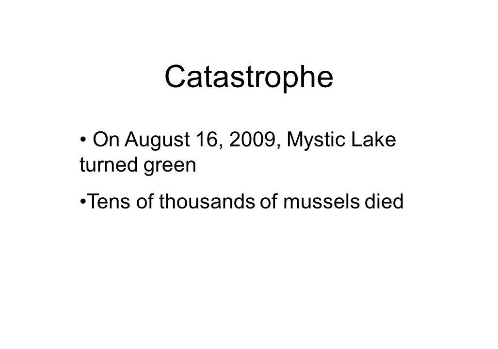 Catastrophe On August 16, 2009, Mystic Lake turned green Tens of thousands of mussels died