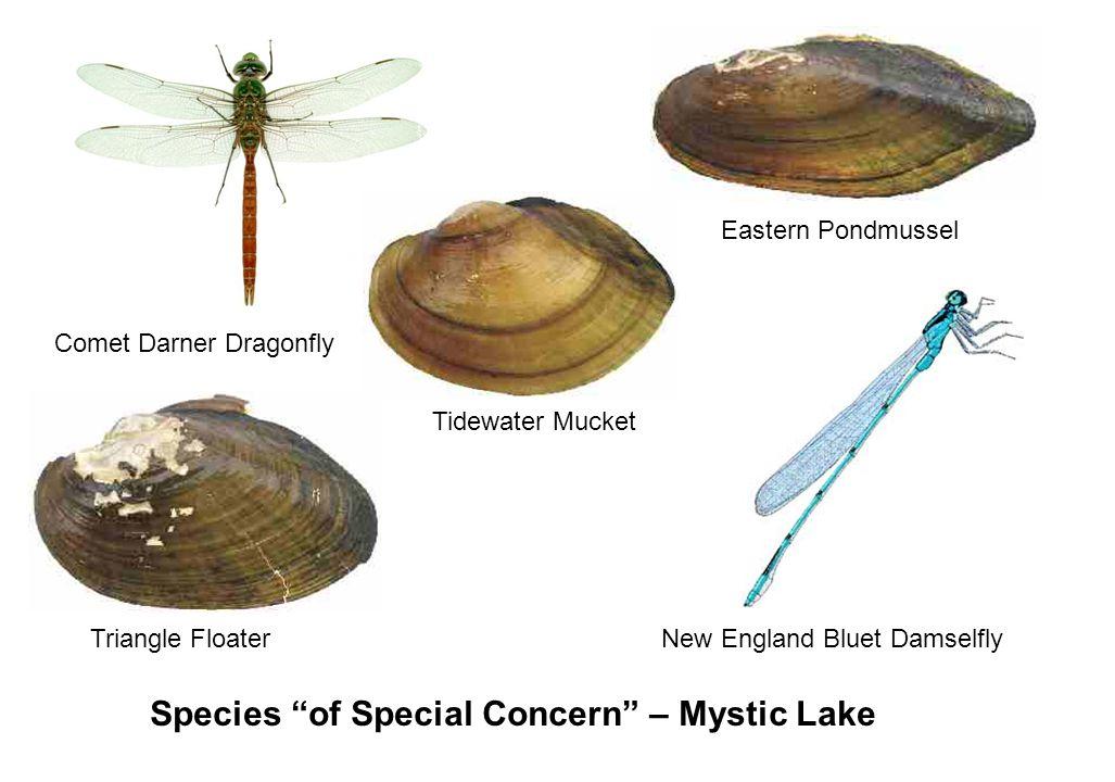First Pond Study, 2003-2005