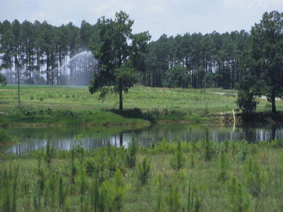 Assessment of Farm Ponds Quantity and their hydrologic significance Study area: South Georgia HUC08 Sub-basins