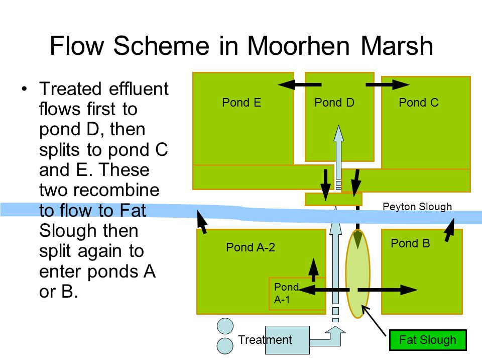 Pond EPond DPond C Pond A-2 Pond A-1 Pond B Flow Scheme in Moorhen Marsh Treated effluent flows first to pond D, then splits to pond C and E.