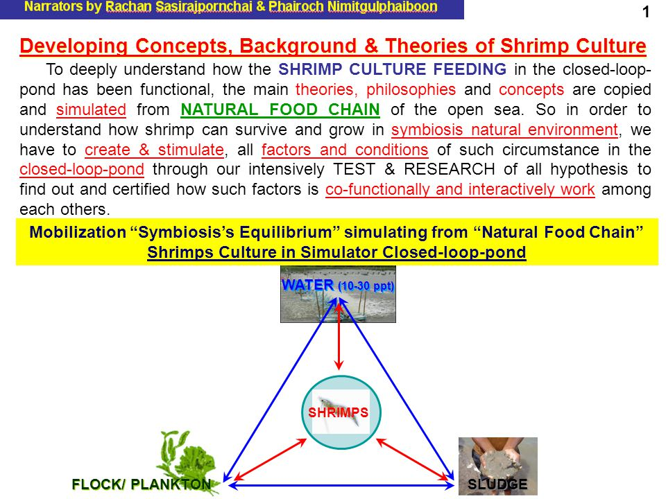 To deeply understand how the SHRIMP CULTURE FEEDING in the closed-loop- pond has been functional, the main theories, philosophies and concepts are cop