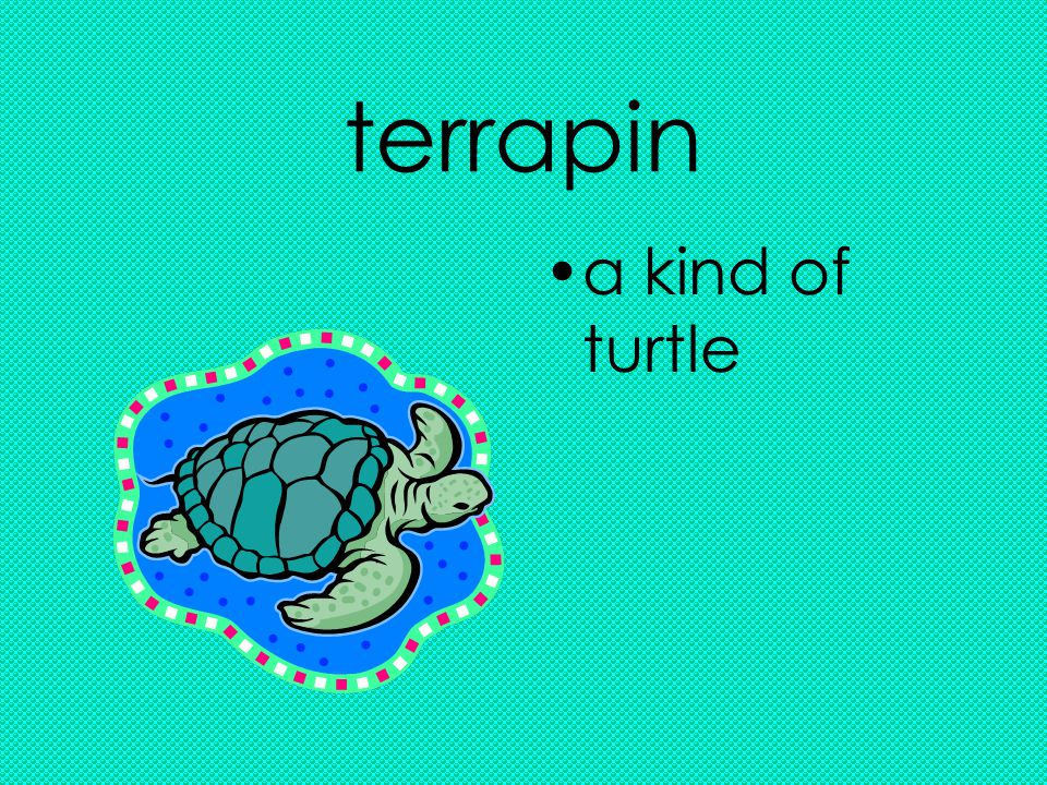 terrapin a kind of turtle