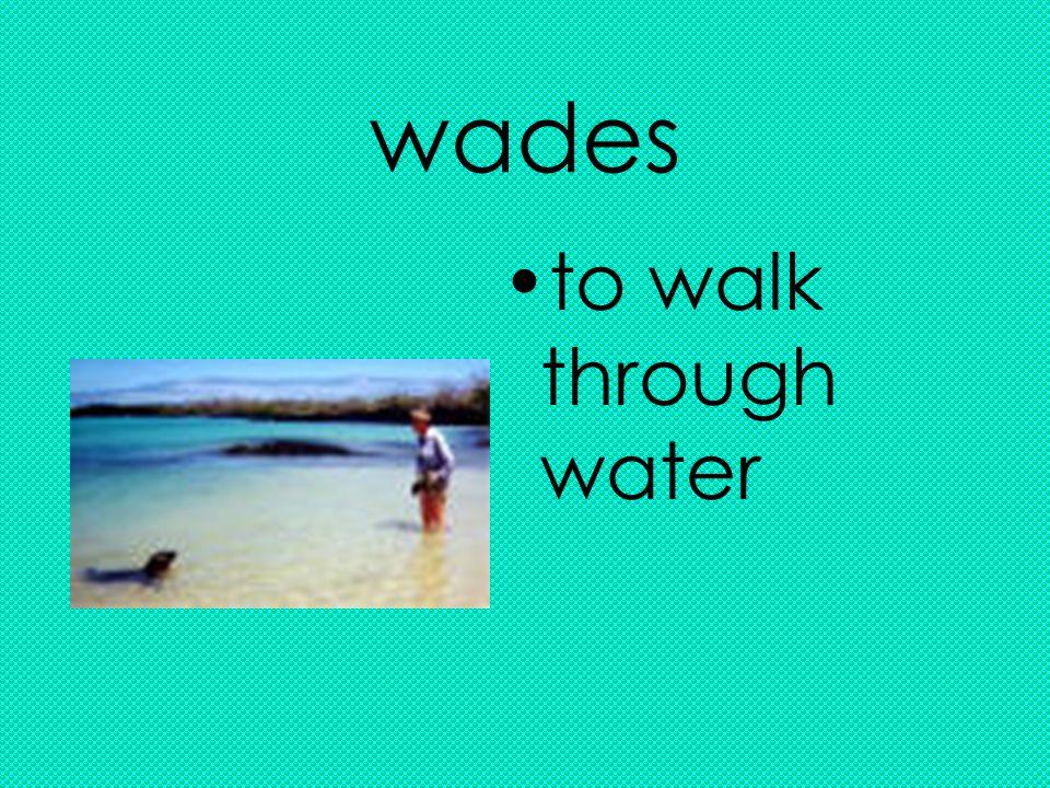 wades to walk through water