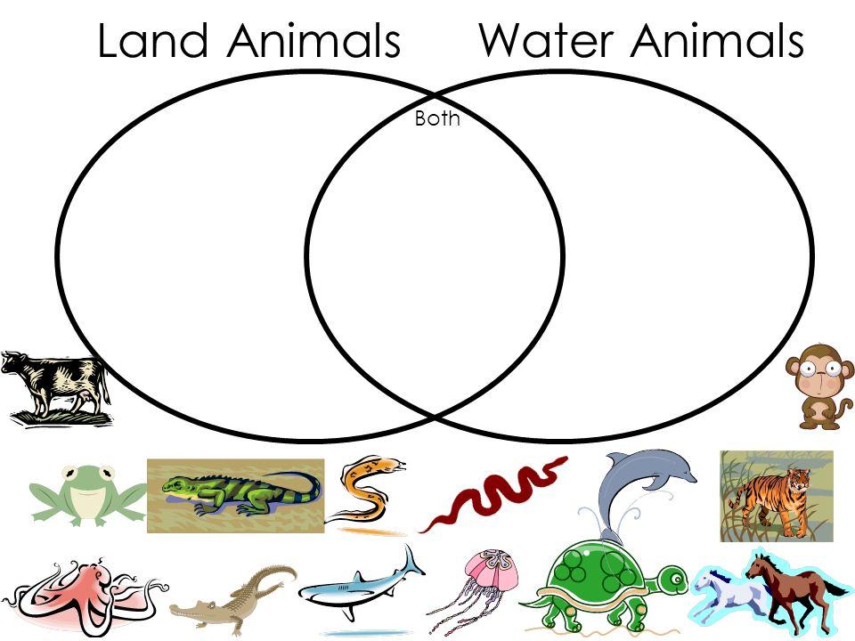 Land AnimalsWater Animals Both