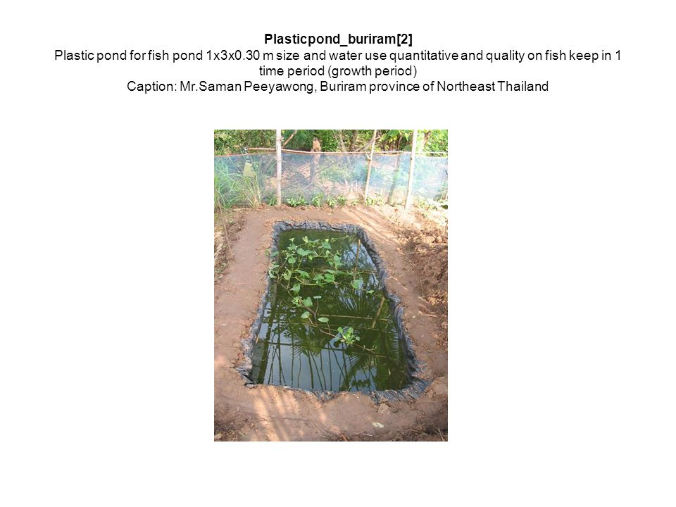 Plasticpond_buriram[2] Plastic pond for fish pond 1x3x0.30 m size and water use quantitative and quality on fish keep in 1 time period (growth period) Caption: Mr.Saman Peeyawong, Buriram province of Northeast Thailand