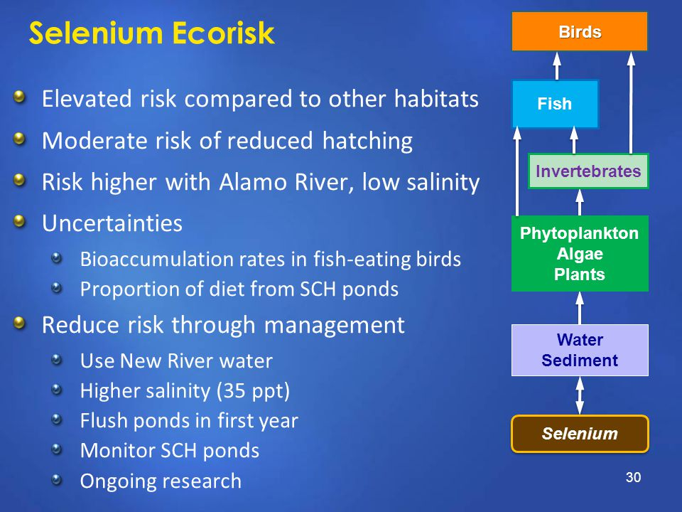 Selenium Ecorisk Elevated risk compared to other habitats Moderate risk of reduced hatching Risk higher with Alamo River, low salinity Uncertainties B