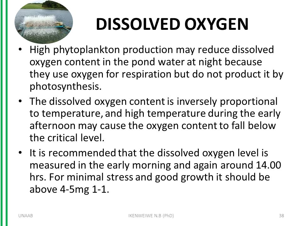 DISSOLVED OXYGEN High phytoplankton production may reduce dissolved oxygen content in the pond water at night because they use oxygen for respiration