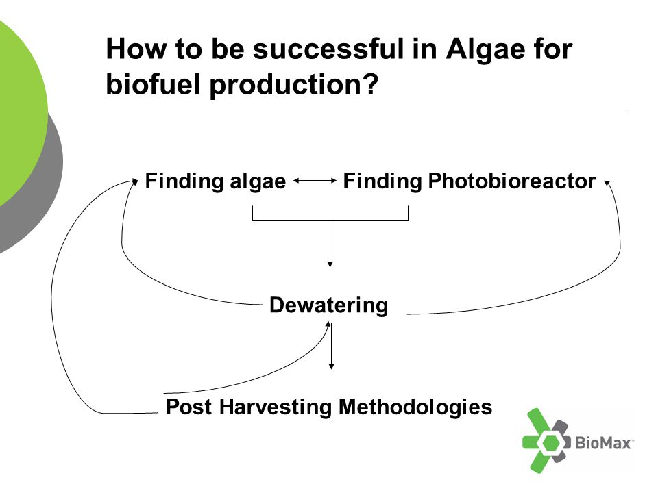 How to be successful in Algae for biofuel production.