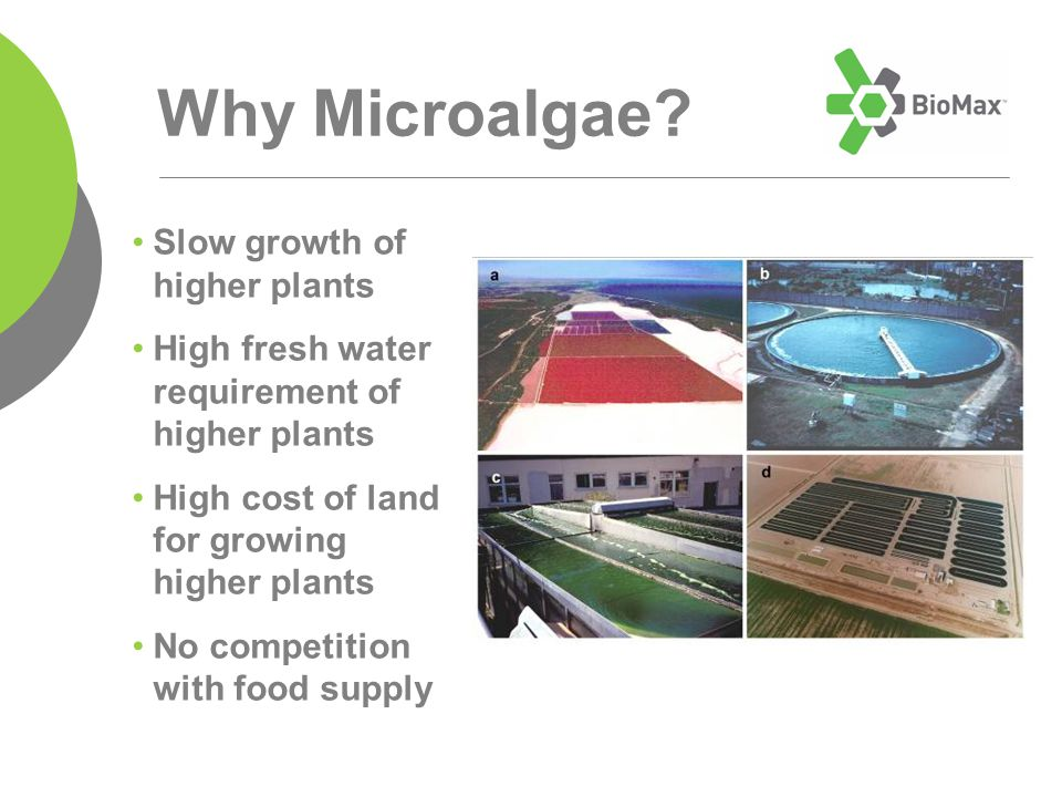 Slow growth of higher plants High fresh water requirement of higher plants High cost of land for growing higher plants No competition with food supply Why Microalgae