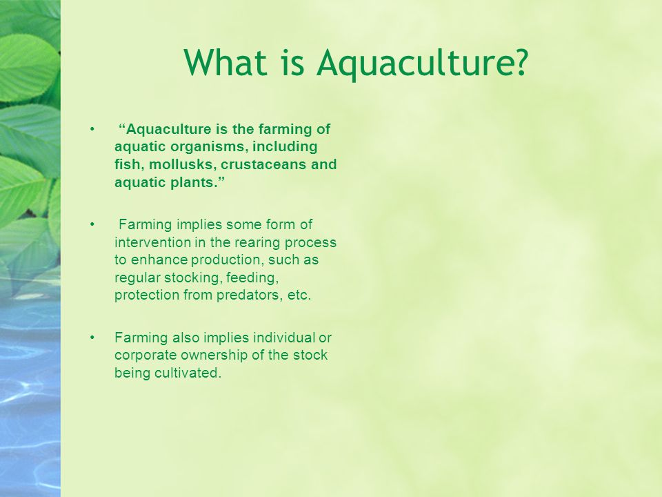 What is Aquaculture.