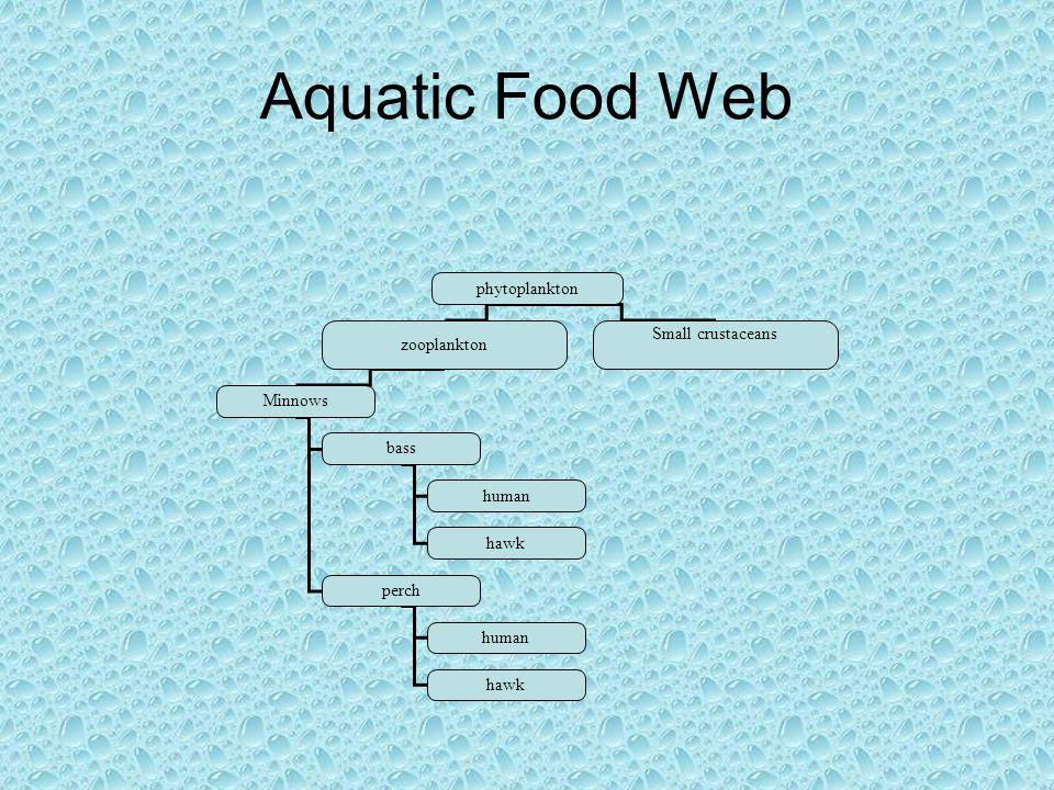 Aquatic Food Web phytoplankton zooplankton Small crustaceans Minnows bass perch human hawk human hawk