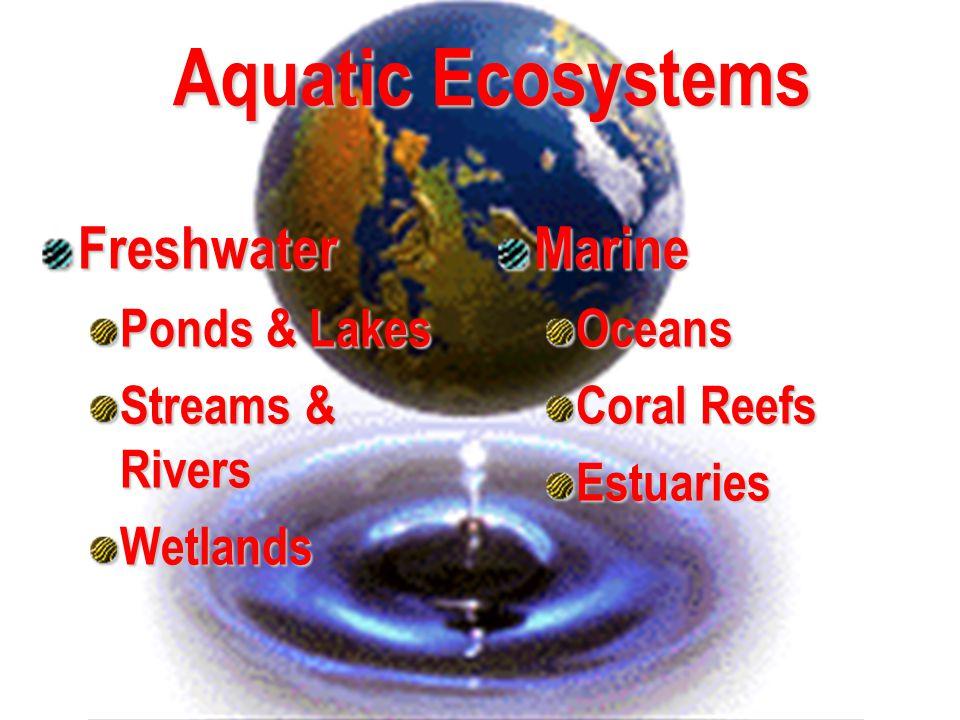Freshwater Ponds & Lakes Streams & Rivers Wetlands