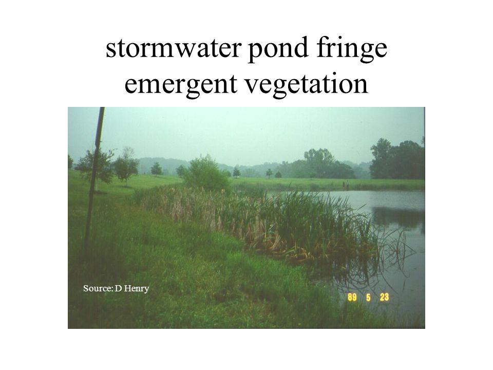 stormwater pond fringe emergent vegetation Source: D Henry