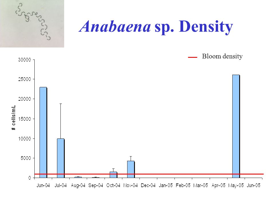 Anabaena sp. Density Bloom density