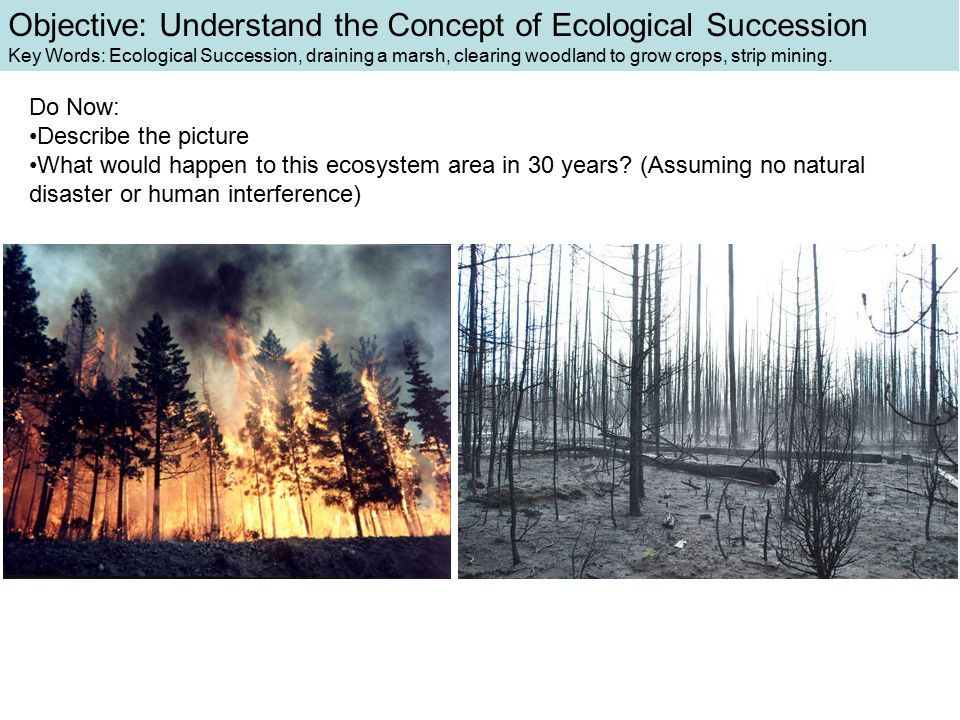 Objective: Understand the Concept of Ecological Succession Key Words: Ecological Succession, draining a marsh, clearing woodland to grow crops, strip