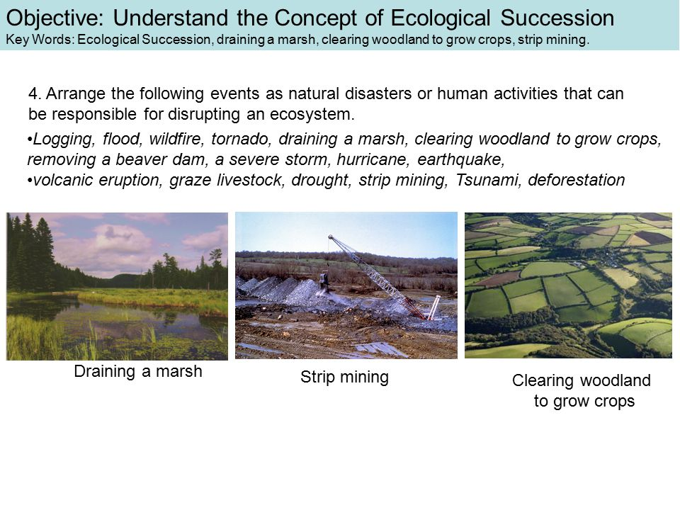 4. Arrange the following events as natural disasters or human activities that can be responsible for disrupting an ecosystem. Logging, flood, wildfire