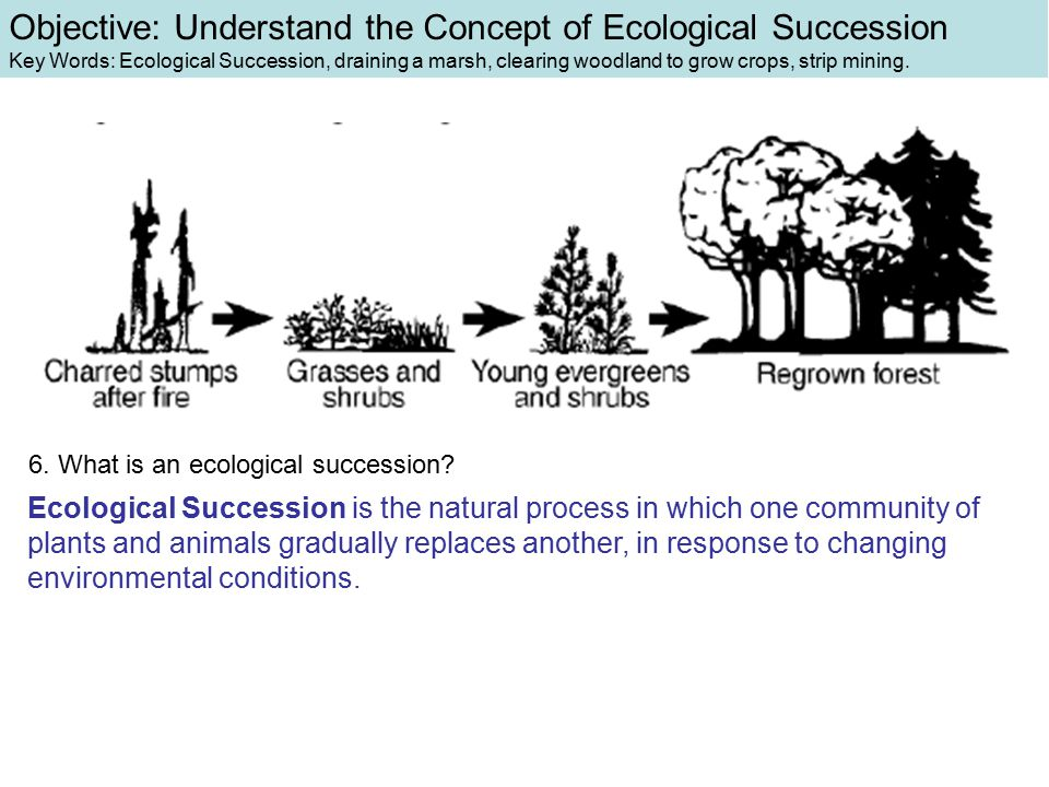 Ecological Succession is the natural process in which one community of plants and animals gradually replaces another, in response to changing environmental conditions.