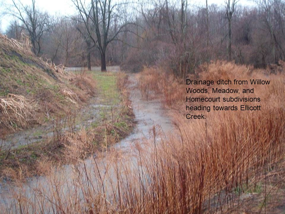 Drainage ditch from Willow Woods, Meadow, and Homecourt subdivisions heading towards Ellicott Creek.